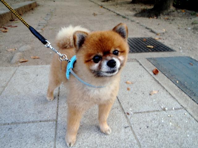 ご近所犬 タロウ