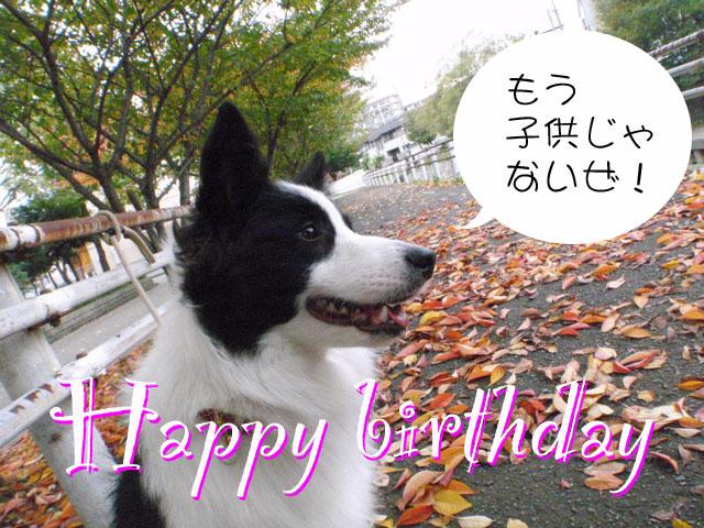 パトン誕生日、1歳になりました!