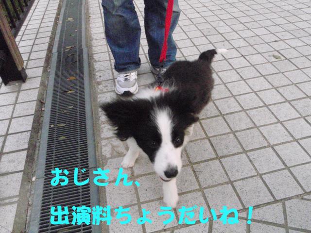 朝から子犬ボーダー、ソラちゃんです。