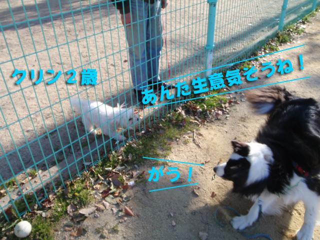 ご近所犬続々登場!