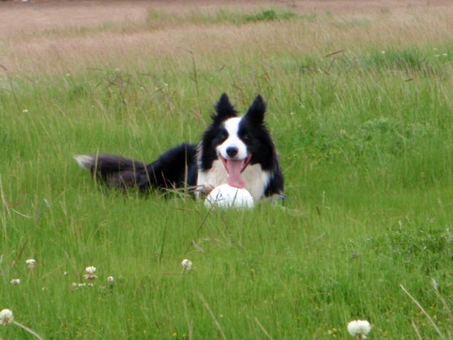 草むらでのんびり