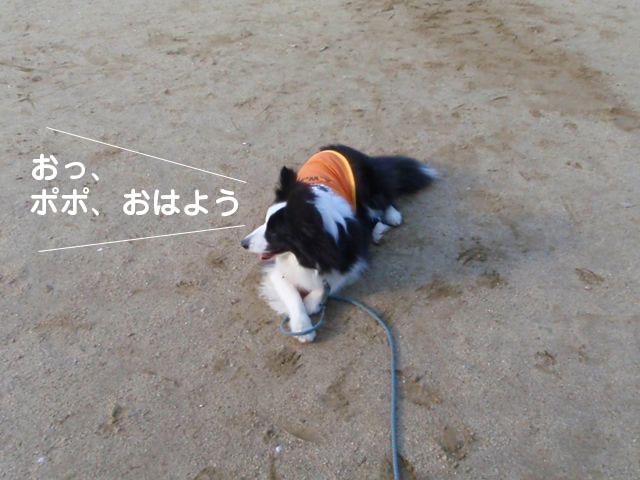 ポポ〜〜〜〜
