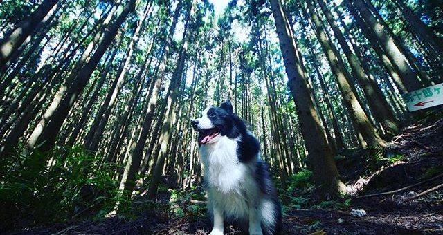 天気が良かったので篠山へ。両側に杉の木が並ぶ林道は、心地いい風が吹いてました。#篠山#クワモンペ