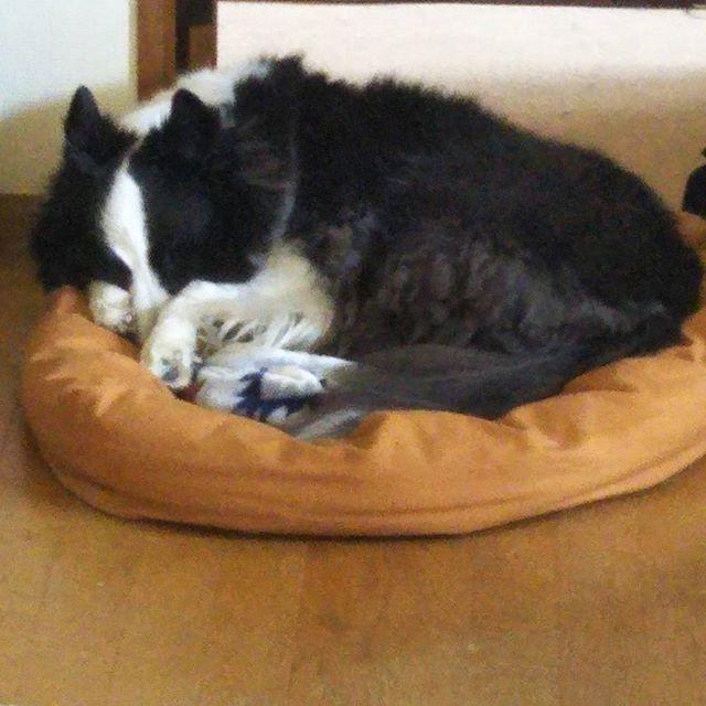 少し前に作ったベッド。綿の量を調整したら気に入って長い時間寝てくれるようになった。