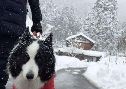 雪の美山を歩いてきました。#美山かやぶきの里