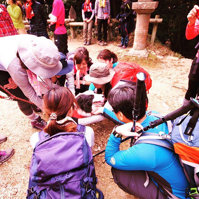 三田と篠山の間にある虚空蔵山に行って来ました。聖徳太子が夢のお告げで建立したと言われる虚空蔵寺本堂前で登山するグループに囲まれて可愛がられるパトン。#僕ってアイドル