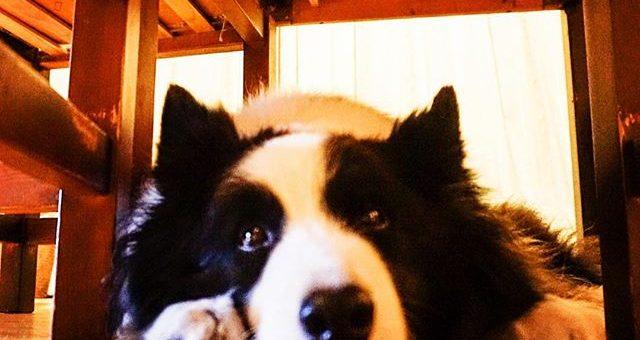 ひっぱりこして遊んだあと急にテーブルの下に入っちゃったパトン。どうしたのかな?