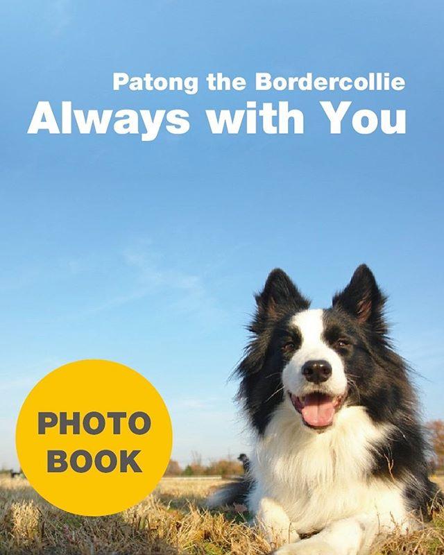 以前パトンのフォトブックを電子書籍で作りました。パブーというサイトで無料公開してるので、もし良かったら見てやってください。タイトル「Patong the bordercollie always with you」http://p.booklog.jp/book/84884