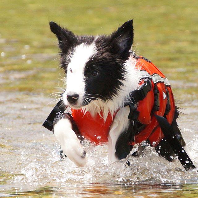 本日、パクチー川遊びデビュー!最初びびってたけどパワフルな泳ぎを見せてくれました。ついでに美山乳業のジェラートもちょこっとだけデビューしちゃいました。#美山かやぶきの里 #川遊び