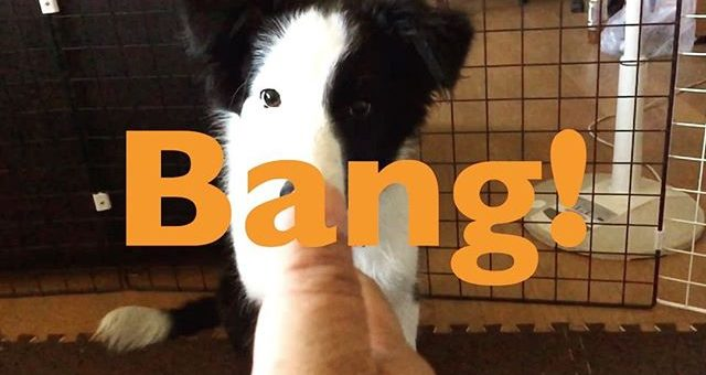 パクチー、今日も頑張って練習してます。#bang#まだ4ヶ月