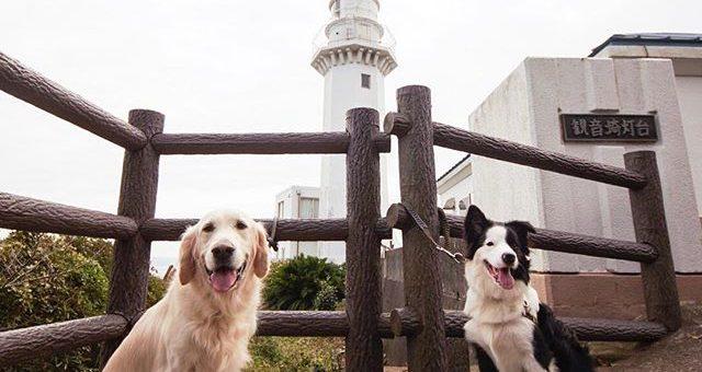 灯台でコナンと再会!次はいつ会えるかなぁ。#観音崎灯台