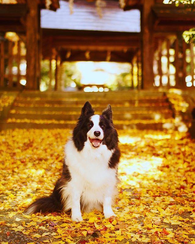 落ち葉が絨毯みたいで綺麗だったね。今年はパクチーと行ってみるね。