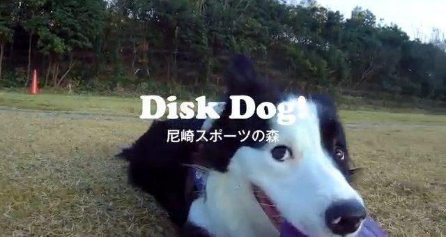 今週も尼崎スポーツの森でディスクやりました。のんびり楽しみながらやってます。